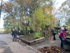 Volunteers cleaning garden at zoo