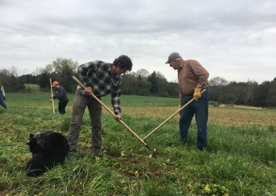 Volunteers hoeing ground
