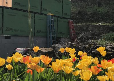 Flowers blooming by house construction